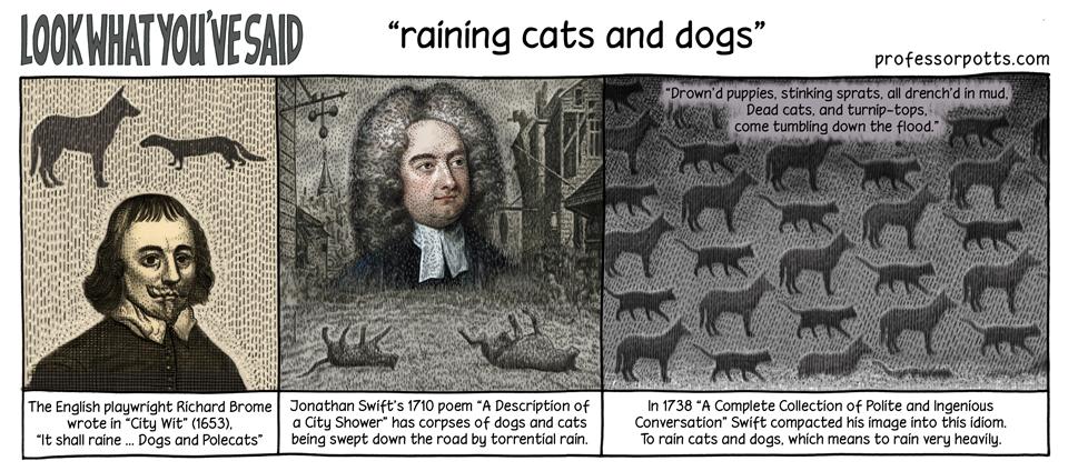 RainCatsandDogs