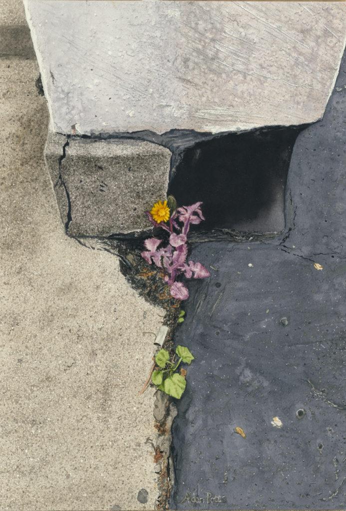 Watercolour wildflower